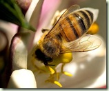 bee-on-the-meyer_w725_h544
