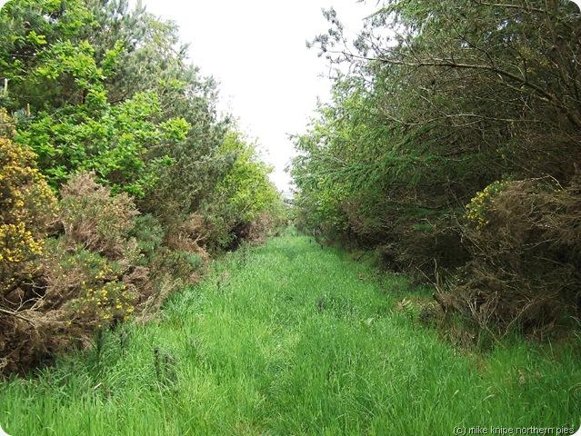 a woodland bit