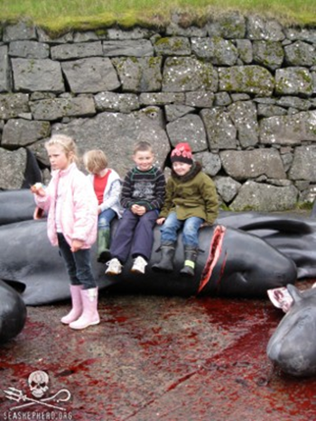 A morbid scene: Children sit on a newly slaughtered Pilot Whale after a Grind in The Faroes. Photo: Sofia Jonsson / Sea Shepherd