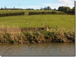 Wiltshire-20120417-00062