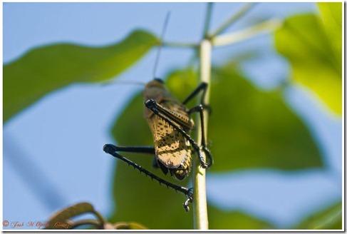 insectos13