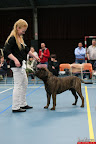 20130510-Bullmastiff-Worldcup-0722.jpg