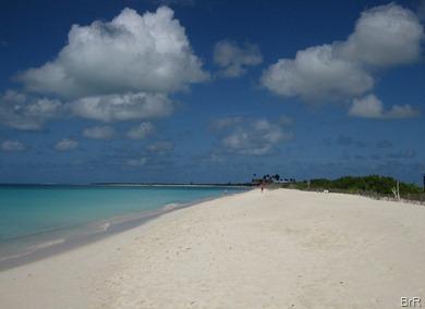 Barbuda_rosa_Sand