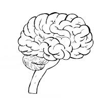 cerebro-t9487.jpg