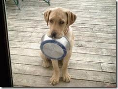cachorrocomfome-sem-ração