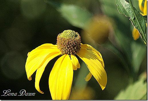 FPC_Yellow