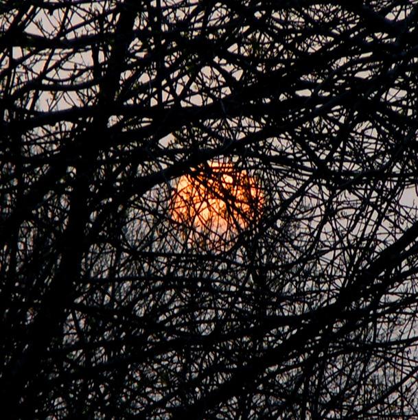 el sol tras las ramas