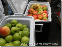 apple cider - The Backyard Farmwife