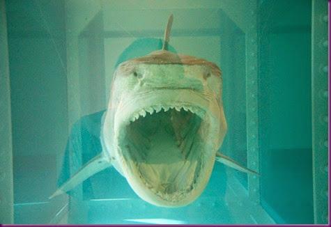 tiburon-hirst
