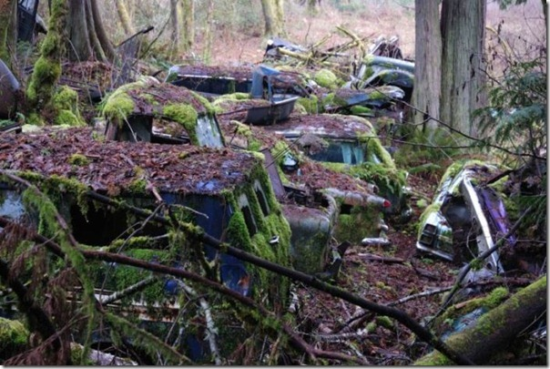 Cemitério de carros na floresta (2)