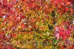 7 - Glória Ishizaka - Folhas de Outono