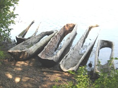 Plimoth Plant hollowed out tree boats1