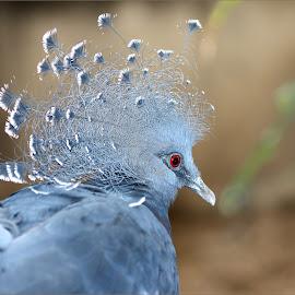 by Dennis Ba - Animals Birds