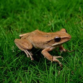 by Razone Wane - Animals Amphibians