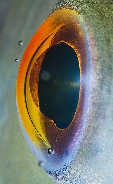 animal-eyes-15