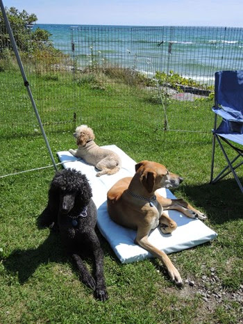 20140819_140111-pq-dogs