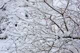 Thick snow on the tree branches