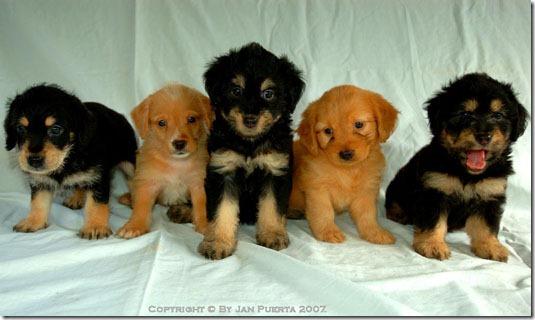 fotos de perritos imagenesifotos.blogspot (4)