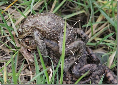109-toads