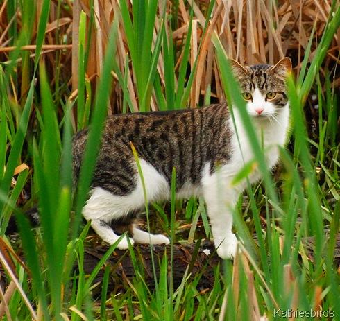 7. cat-kab