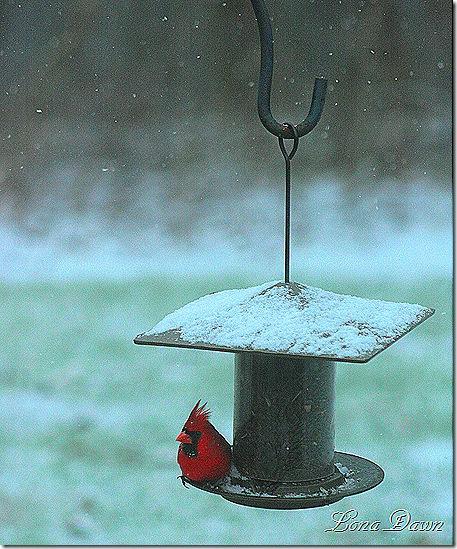 Cardinal_Jan2012