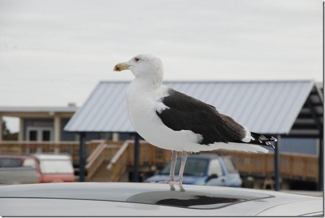 11-15-12 A Delaware Seashore State Park 022