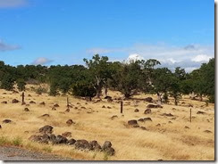 Rock strenw field