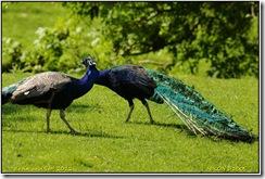 Bradgate Park D300s X14  04-06-2012 13-40-011