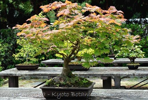 Glória Ishizaka -   Kyoto Botanical Garden 2012 - 48