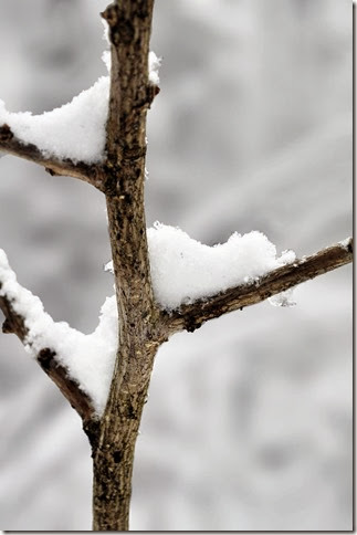 branch in snow