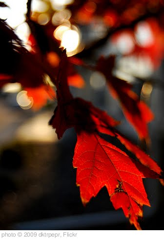 'Autumn 2009' photo (c) 2009, dktrpepr - license: http://creativecommons.org/licenses/by-nd/2.0/