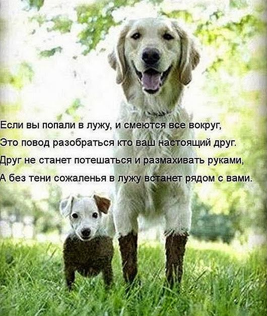 1361559340_novye-kotomatricy-14