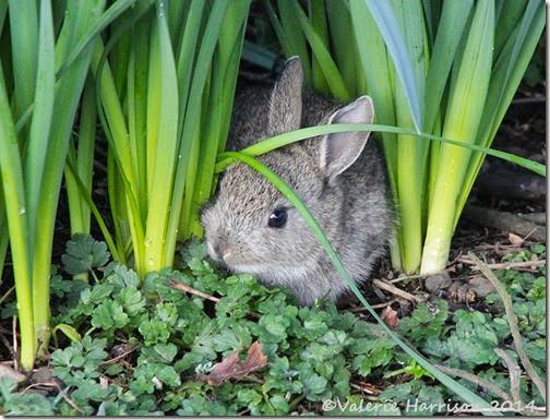 3  bunny-9