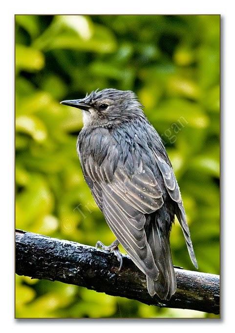 Wet Birds 6  S y