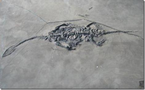 fosilesdinosaurios05
