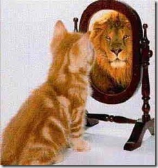mirror cat and lion