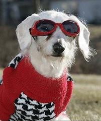 Oldest-Dog