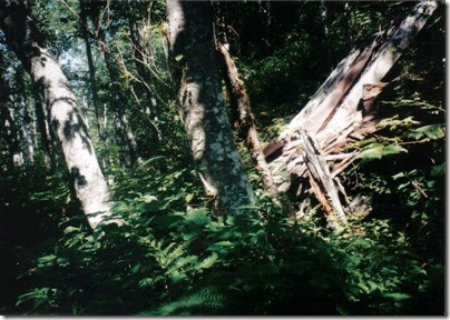 Collapsed Snowshed Ruins near Milepost 1715 on the Iron Goat Trail in 1998