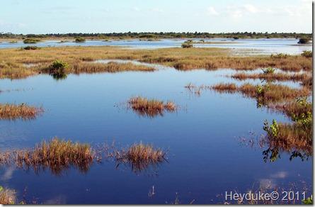 2011-11-12 Merritt Island NWR 005