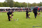 20100513-Bullmastiff-Clubmatch_31065.jpg