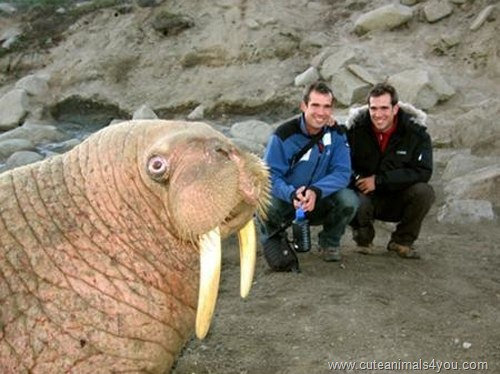50 Funniest Animal Photobombs Of All Time ~ Cute Animals 4 You
