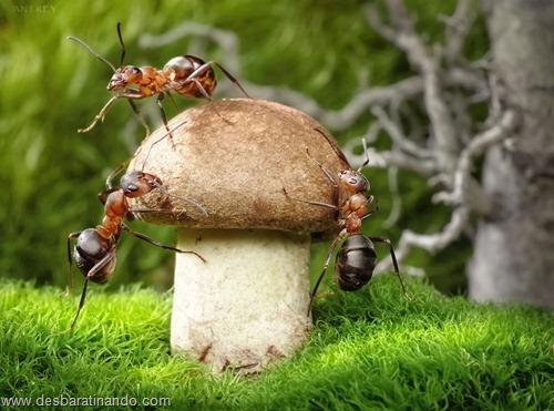 formigas inacreditaveis incriveis desbaratinando  (27)