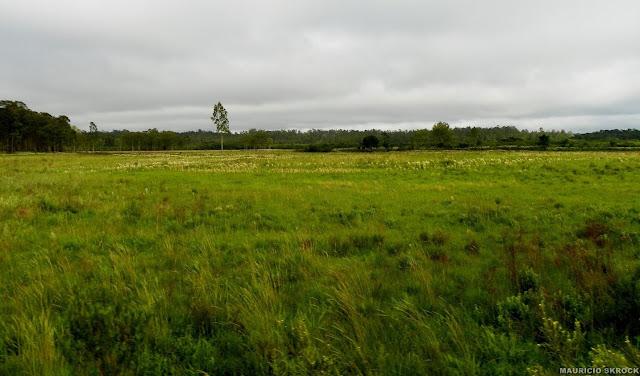 Paysage du Paraná près de Curitiba. Décembre 2010. Photo : Mauricio Skrock