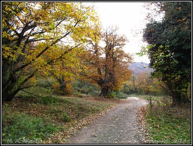 Lantz otoño 014