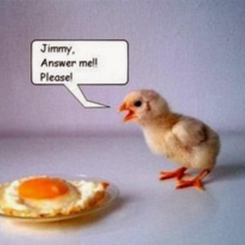 Anak Ayam dan Telor Ceplok
