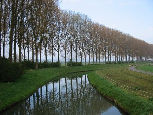Poplars and canal.jpg