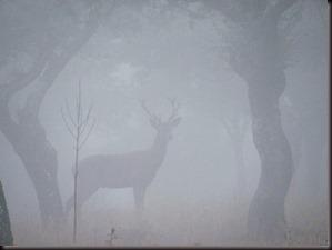 Niebla tupida