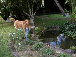 Dogs Trekking 4 (17)