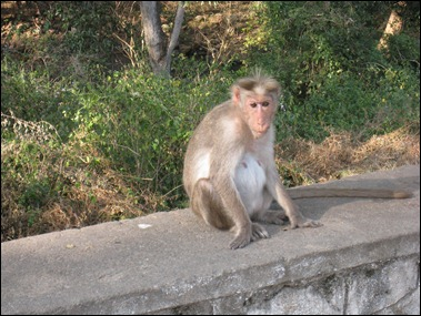 Forlorn Monkey