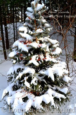 christmas tree snowy